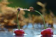 Ο μαγευτικός μικρόκοσμος των σαλιγκαριών (2)
