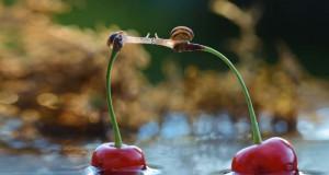 Ο μαγευτικός μικρόκοσμος των σαλιγκαριών