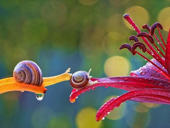 Ο μαγευτικός μικρόκοσμος των σαλιγκαριών (3)