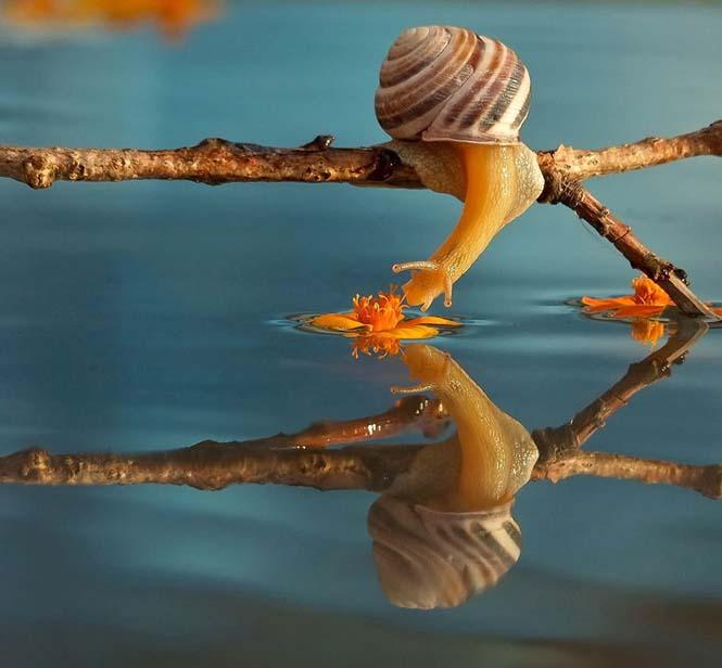 Ο μαγευτικός μικρόκοσμος των σαλιγκαριών (5)