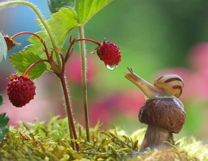 Ο μαγευτικός μικρόκοσμος των σαλιγκαριών (6)