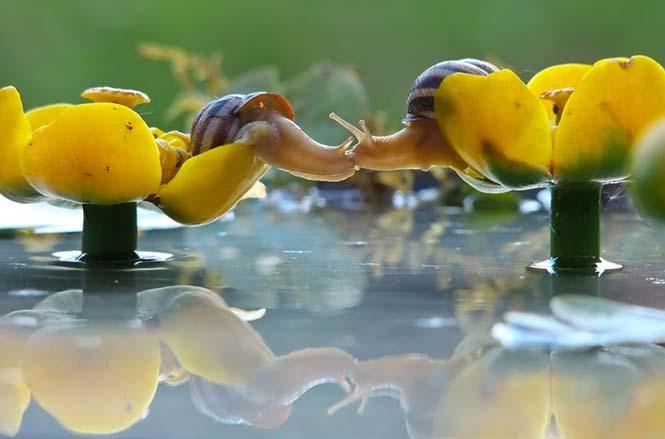 Ο μαγευτικός μικρόκοσμος των σαλιγκαριών (9)