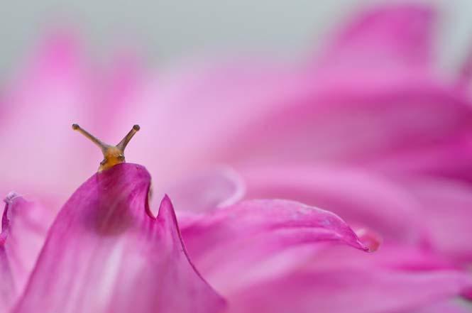 Ο μαγευτικός μικρόκοσμος των σαλιγκαριών (11)