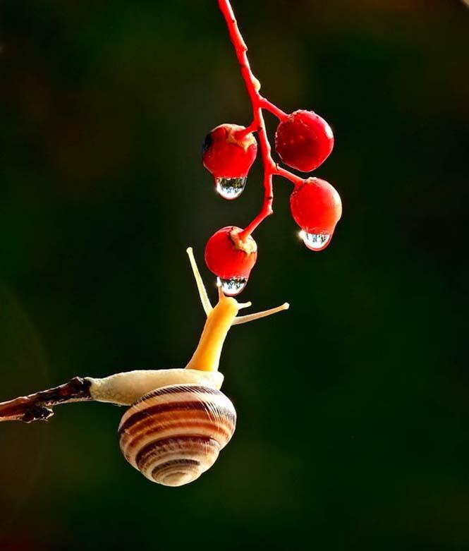 Ο μαγευτικός μικρόκοσμος των σαλιγκαριών (17)