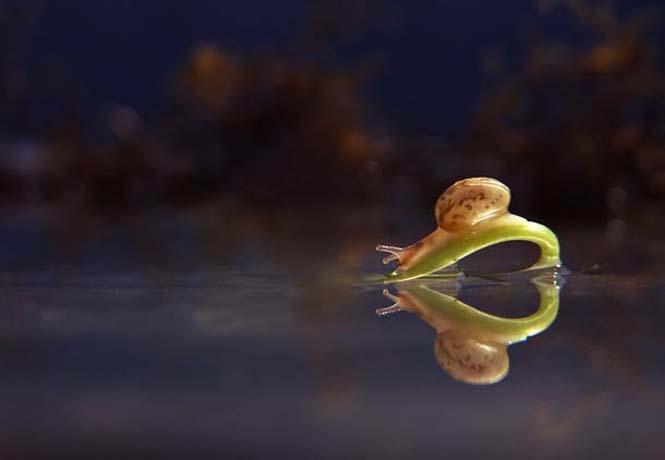 Ο μαγευτικός μικρόκοσμος των σαλιγκαριών (21)