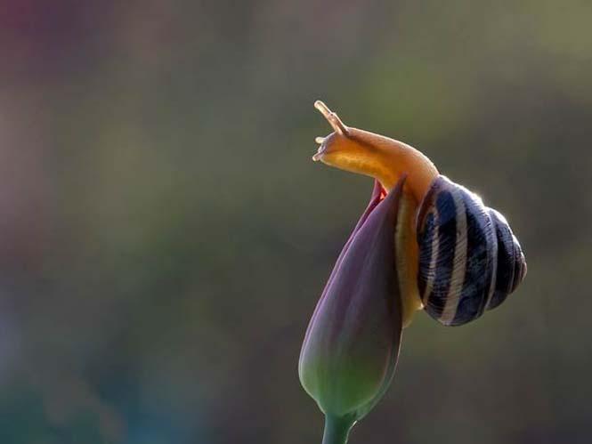 Ο μαγευτικός μικρόκοσμος των σαλιγκαριών (23)
