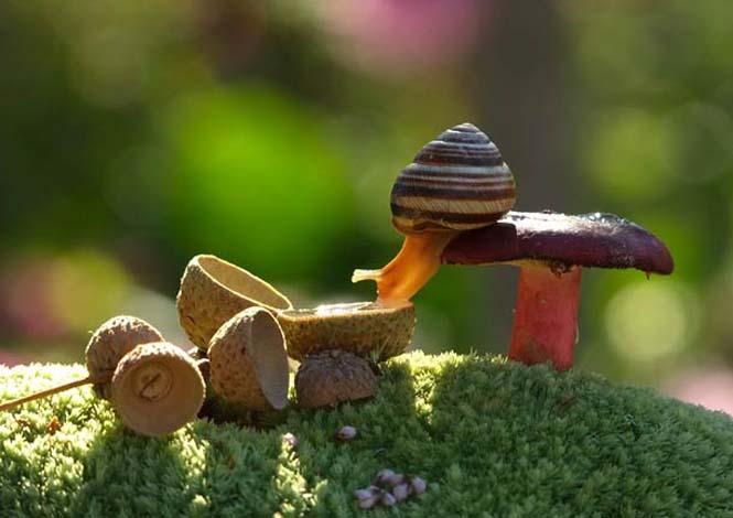 Ο μαγευτικός μικρόκοσμος των σαλιγκαριών (24)