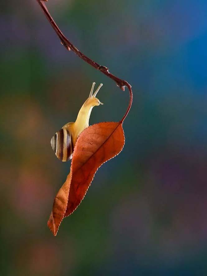 Ο μαγευτικός μικρόκοσμος των σαλιγκαριών (25)