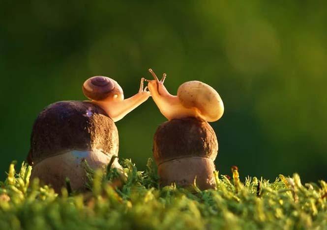 Ο μαγευτικός μικρόκοσμος των σαλιγκαριών (27)