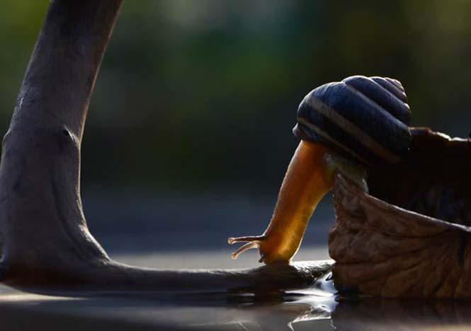 Ο μαγευτικός μικρόκοσμος των σαλιγκαριών (28)