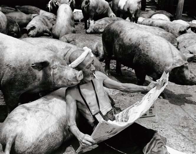 Η μοναδική σχέση ενός αγρότη με τα γουρούνια του (7)