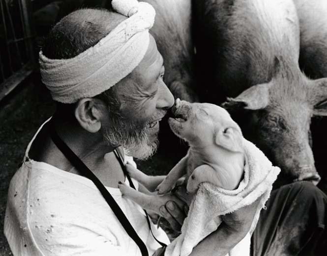 Η μοναδική σχέση ενός αγρότη με τα γουρούνια του (9)