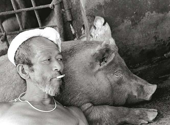 Η μοναδική σχέση ενός αγρότη με τα γουρούνια του (11)