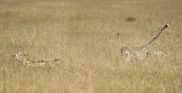 Μπορείτε να εντοπίσετε την λεοπάρδαλη; (3)