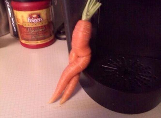 Το καλλίγραμμο καρότο | Φωτογραφία της ημέρας