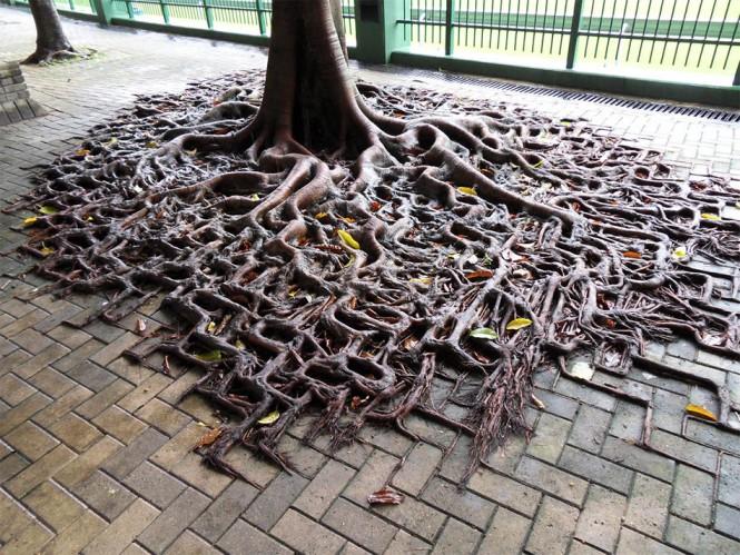 Η φύση βρίσκει πάντα τον τρόπο... | Φωτογραφία της ημέρας (1)
