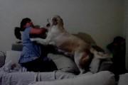 Σκύλοι προστατεύουν παιδί από βίαιη μητέρα