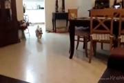 Σκύλος αποτυγχάνει με ξεκαρδιστικό τρόπο να πηδήξει στον καναπέ