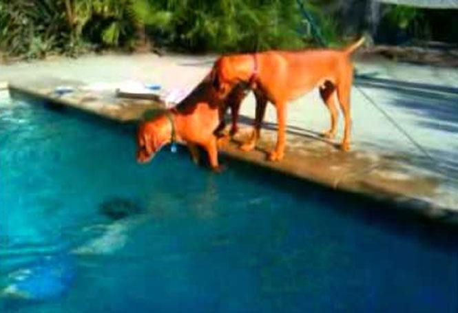 Σκύλος παθαίνει πανικό, όταν ο ιδιοκτήτης του κρύβεται κάτω από το νερό