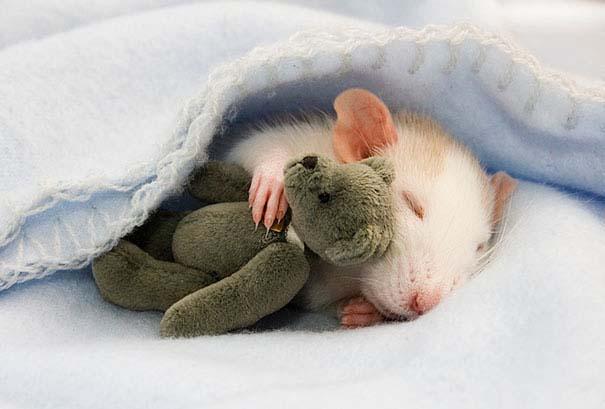 Χαριτωμένα ζώα χαλαρώνουν αγκαλιά με λούτρινα ζωάκια (1)