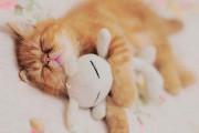 Χαριτωμένα ζώα χαλαρώνουν αγκαλιά με λούτρινα ζωάκια (4)