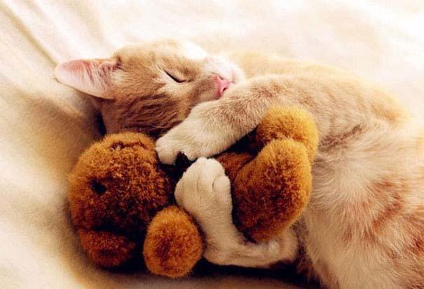 Χαριτωμένα ζώα χαλαρώνουν αγκαλιά με λούτρινα ζωάκια (6)