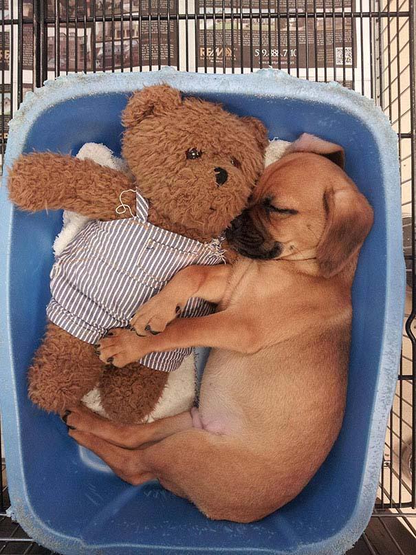 Χαριτωμένα ζώα χαλαρώνουν αγκαλιά με λούτρινα ζωάκια (8)