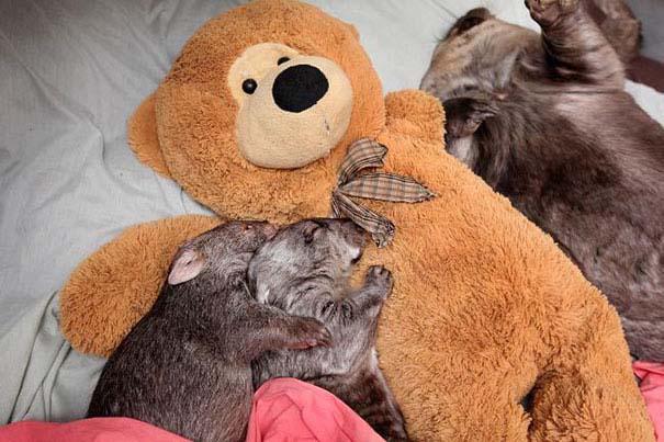 Χαριτωμένα ζώα χαλαρώνουν αγκαλιά με λούτρινα ζωάκια (10)