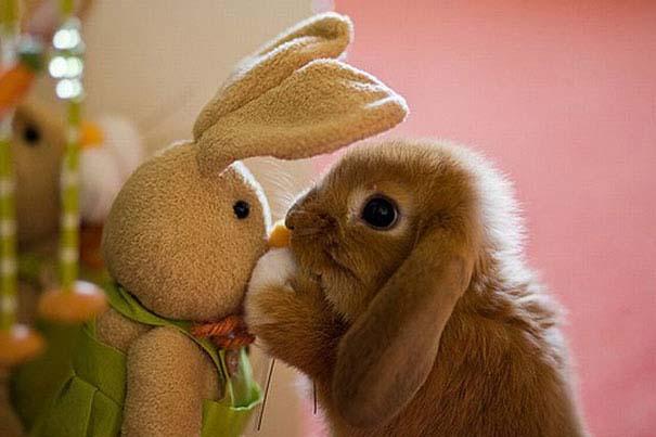 Χαριτωμένα ζώα χαλαρώνουν αγκαλιά με λούτρινα ζωάκια (14)