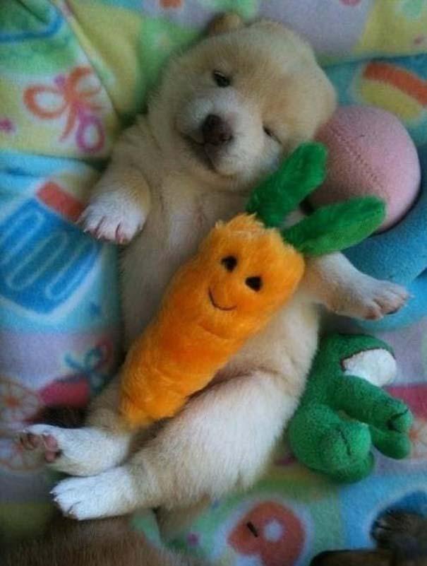 Χαριτωμένα ζώα χαλαρώνουν αγκαλιά με λούτρινα ζωάκια (30)