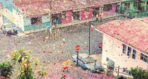 Χωριό στην Κόστα Ρίκα καλύφθηκε από 8 εκατομμύρια πέταλα λουλουδιών