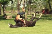 Yoga με άλογο