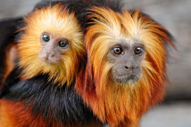 Η αγάπη της μητέρας: 35 υπέροχες φωτογραφίες από το ζωικό βασίλειο (2)