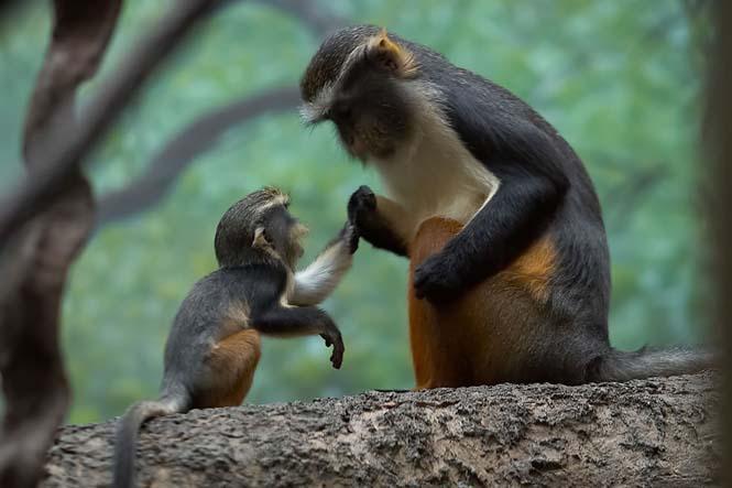 Η αγάπη της μητέρας: 35 υπέροχες φωτογραφίες από το ζωικό βασίλειο (3)