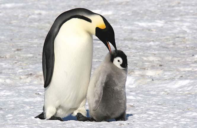 Η αγάπη της μητέρας: 35 υπέροχες φωτογραφίες από το ζωικό βασίλειο (9)