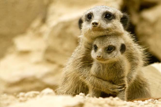 Η αγάπη της μητέρας: 35 υπέροχες φωτογραφίες από το ζωικό βασίλειο (14)