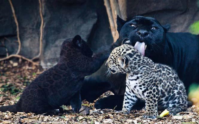 Η αγάπη της μητέρας: 35 υπέροχες φωτογραφίες από το ζωικό βασίλειο (17)
