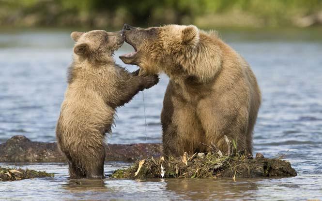 Η αγάπη της μητέρας: 35 υπέροχες φωτογραφίες από το ζωικό βασίλειο (19)