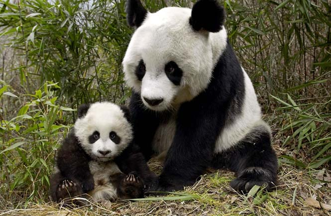 Η αγάπη της μητέρας: 35 υπέροχες φωτογραφίες από το ζωικό βασίλειο (21)