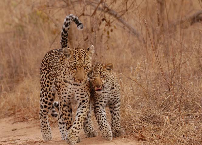 Η αγάπη της μητέρας: 35 υπέροχες φωτογραφίες από το ζωικό βασίλειο (22)