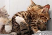 Η αγάπη της μητέρας: 35 υπέροχες φωτογραφίες από το ζωικό βασίλειο (1)