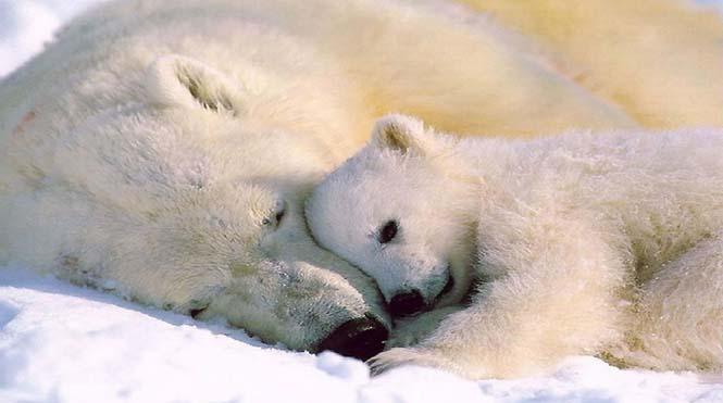 Η αγάπη της μητέρας: 35 υπέροχες φωτογραφίες από το ζωικό βασίλειο (28)