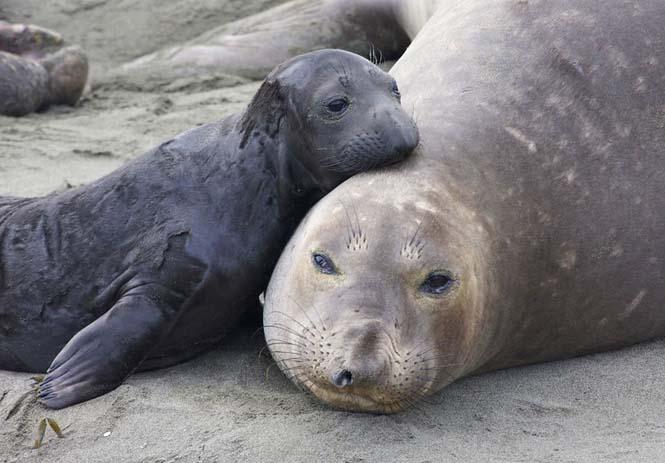 Η αγάπη της μητέρας: 35 υπέροχες φωτογραφίες από το ζωικό βασίλειο (31)