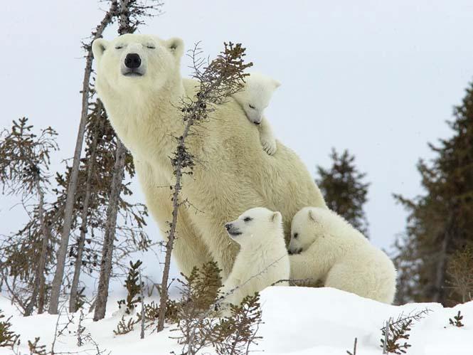 Η αγάπη της μητέρας: 35 υπέροχες φωτογραφίες από το ζωικό βασίλειο (34)