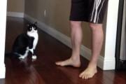 Η αγκαλιά μιας γάτας που έσπασε τα κοντέρ στο YouTube