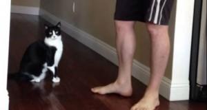 Η αγκαλιά μιας γάτας που έσπασε τα κοντέρ στο YouTube (Video)