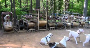 Αναρωτιέστε πως είναι ένα γυμναστήριο για σκύλους; (Video)