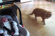 Η αντίδραση μιας γάτας που βλέπει για πρώτη φορά μωρό