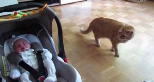 Η αντίδραση μιας γάτας που βλέπει για πρώτη φορά μωρό (Video)