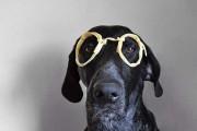 Απίστευτες φωτογραφίες με πρωταγωνιστή έναν σκύλο (19)